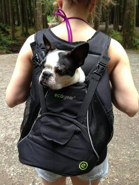 Multi-functional-pet-carrier-pet-backpacks-dog-sac-a-dos-chien-mogwaii (13)