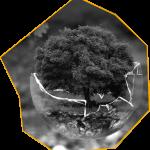 biodiversite 150x150 Comment saisir l'opportunité stratégique de la biodiversité ?