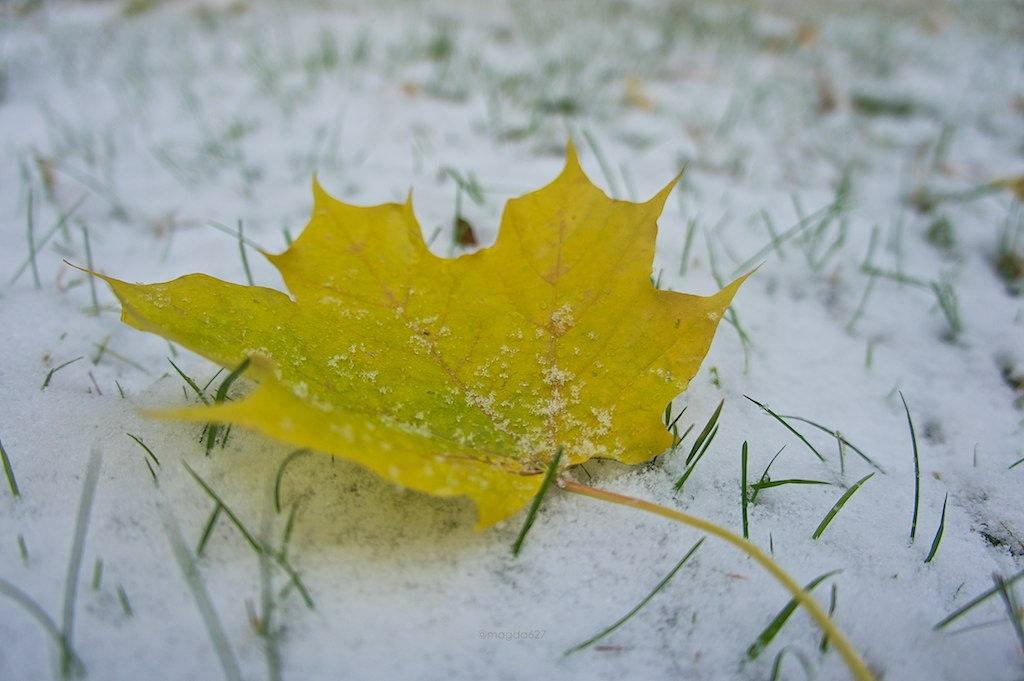 anteketborka.blogspot.com,  first snow 5