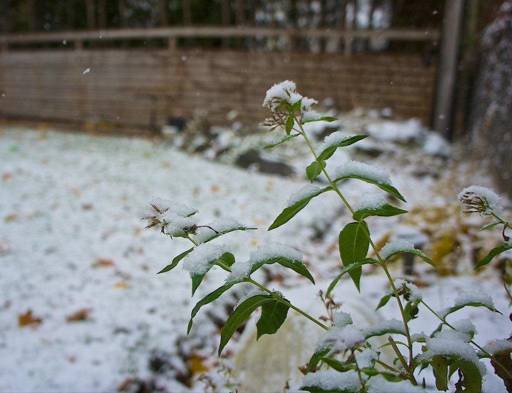 anteketborka.blogspot.com,  first snow 2