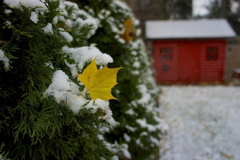 anteketborka.blogspot.com,  first snow 4