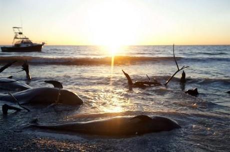 « Hécatombes animales ? » La biodiversité se cache pour mourir / Pierre-Henri Gouyon - Biodiversité