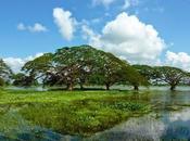Quels voyageurs aiment Lanka