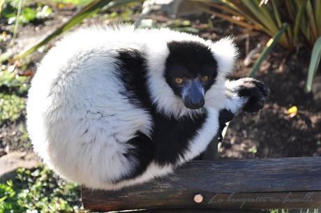 Planete sauvage, visiter un zoo en voiture et dormir au milieu des animaux