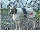 Retrouvez tous modèles d'animaux tricoter pour fêtes