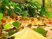 Décembre jardin
