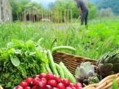 SANTÉ CARDIAQUE: nitrates légumes verts pour éviter caillot FASEB Journal