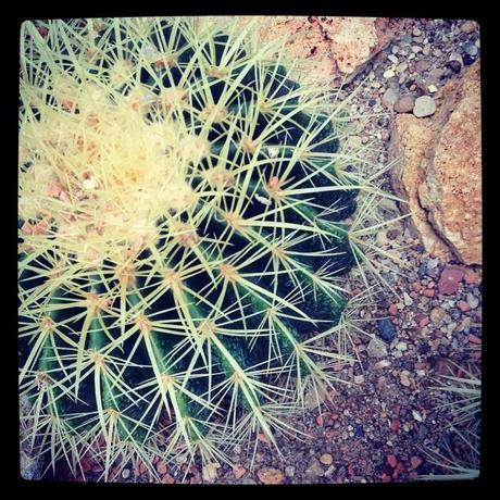 Cactus et froid qui piquent (7 décembre)