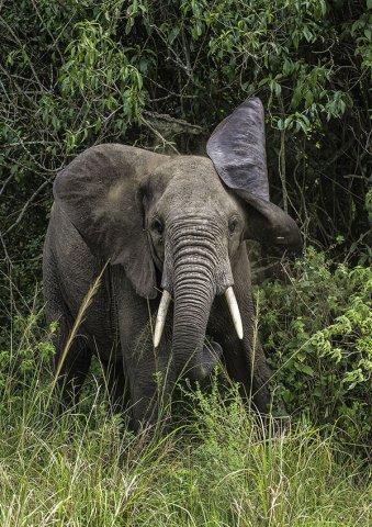 ouganda2 philippe bolle [Podcast #21] Philippe Bolle, un photographe animalier grand voyageur