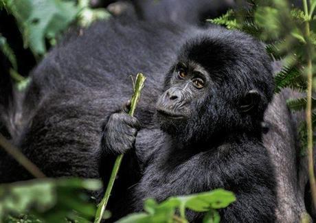 ouganda philippe bolle [Podcast #21] Philippe Bolle, un photographe animalier grand voyageur