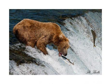 alaska1 philippe bolle [Podcast #21] Philippe Bolle, un photographe animalier grand voyageur