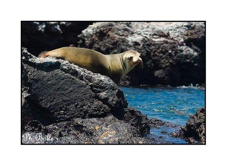galapagos philippe bolle [Podcast #21] Philippe Bolle, un photographe animalier grand voyageur