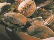 Comme quoi huîtres moules s'accommodent bien entre elles