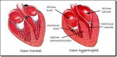 Pour détecter une anomalie cardiaque chez le chat ,il existe ce test sanguin !