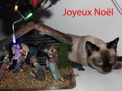 Sapin Noël, quel gâchis!