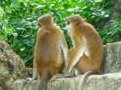 Faut-il partir Lanka... couple pour lune miel