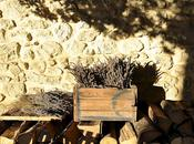 Douceurs hivernales Provence