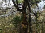 arbres marchent