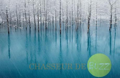 Ces arbres piégés dans la glace au Japon