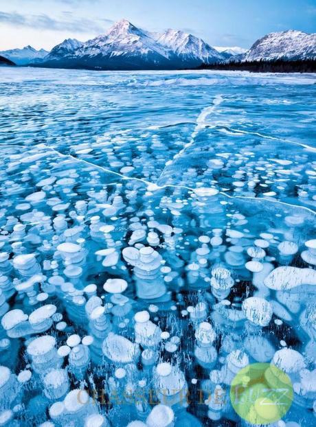 Ces bulles de glace prisonnières du lac Abraham, au Canada