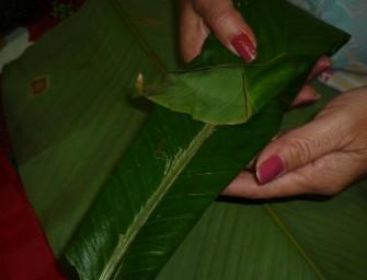 tamal-arroz-fermeture-04