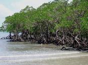 mangrove Pakistan danger
