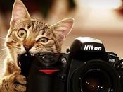 animaux aiment appareils photos