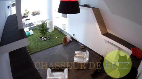 Les Pachas d'Amandine hotel chats en Haiute Savoie