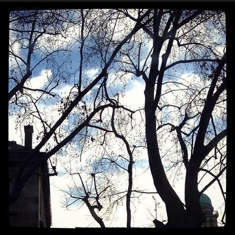 Ciel et arbres de Paris (26 janvier) <script type=