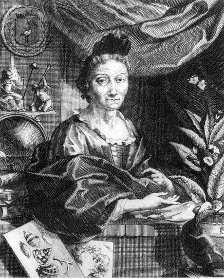 Maria Sibylla Merian, la mère de l'écologie