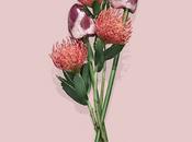 Fleur Viande Serie Ulysse Darcoe