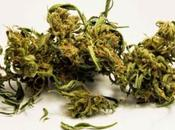 cannabis vend trop bien, Colorado perçoit d'impôts