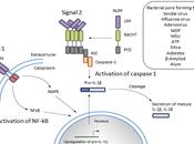#trendsincellbiology #inflammasome #pyroptose #caspase-1 Mécanismes d'activation inflammasomes récentes avancées éclairages nouveaux