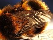 laissez Bayer faire annuler l'interdiction pesticides tueurs d'abeilles