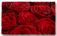 Roses rouges_10