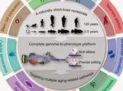 #Cell #vieillissement #vertébrés #télomères #telomerase Plateforme d'Exploration Rapide Vieillissement Maladies chez Vertébrés Courte Durée