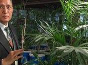 Kamal Meattle, l'homme purifie entreprise grâce plantes