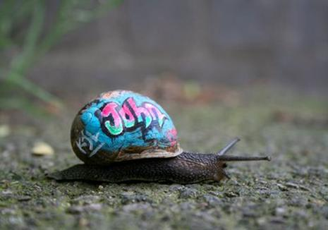 L'escargot version street culture