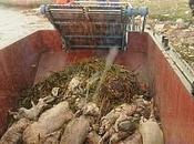 L'agro-alimentaire Bretagne Etat dans l'Etat
