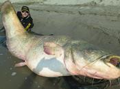 Deux hommes pêchent silure géant (127