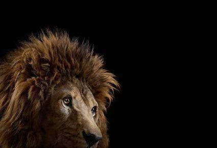 Lion, Brad Wilson