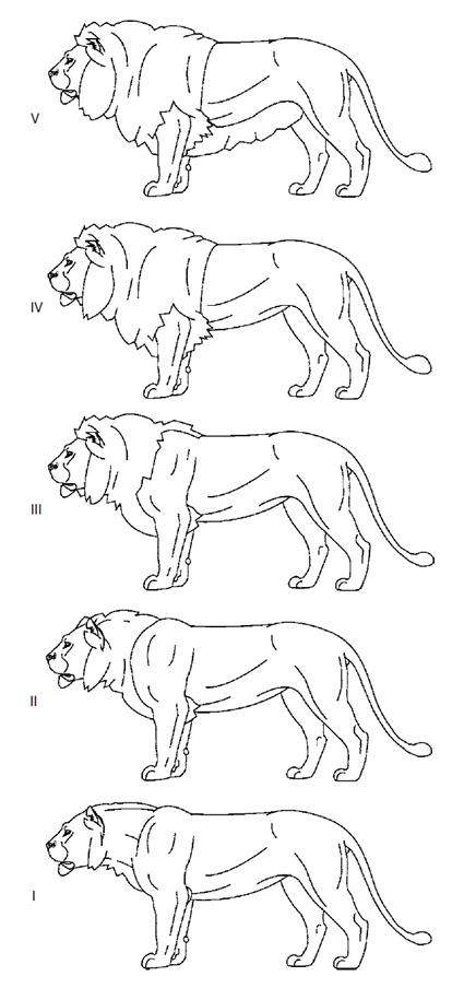 Variation des crinières des populations actuelles de lion