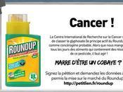 glyphosate utilisé dans Roundup classé cancérogène probable l'OMS