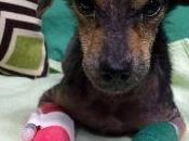L'émouvant sauvetage d'un petit chien abandonné