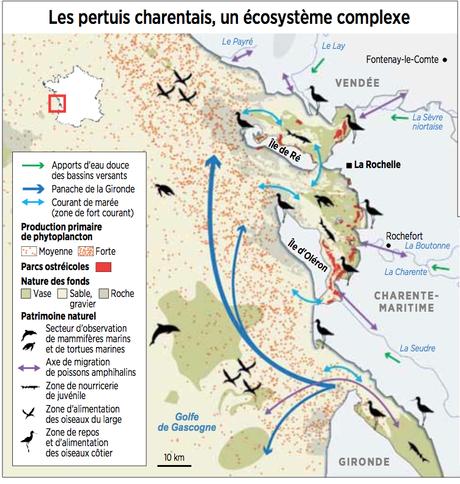 Pertuis charentais et Gironde deviennent le 7e parc naturel marin français