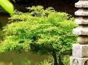 gratuité dans bouddhisme