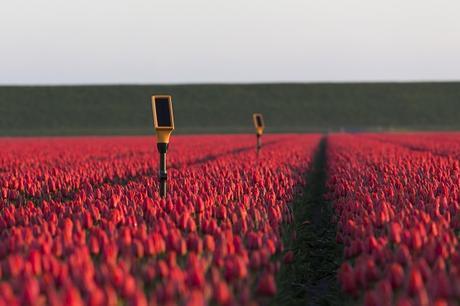 Quand les multinationales de l'agrobusiness s'achètent une vertu climatique