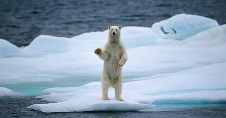 polar-bear-rimouski.jpg&sa=X&ei=3KdDVcyKJ5HYarz1gOgJ&ved=0CAkQ8wc&usg=AFQjCNFT5vQycBPy22QlitdpFU4gyucfYA