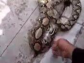 Bangkok, L'huile cuisine secours d'un serpent [HD]