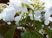 [Instant photo n°1] Flowerstagram